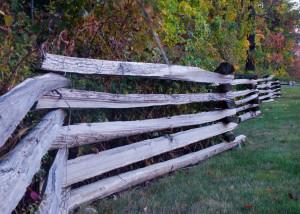 Fence 9-24-10a
