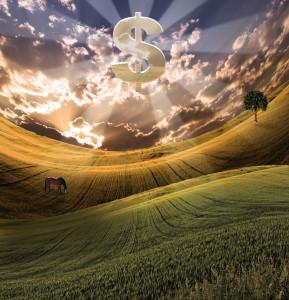 Money in Field